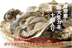 北海道産 生カキ 10個入り 新鮮 殻付き バーベキュー BBQ  大粒 ギフト 贈り物 牡蠣 殻付き 生かき