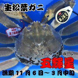 生松葉ガニ(生)、鳥取県ブランド五輝星(いつきぼし)!!漁期11月6日〜3月中旬
