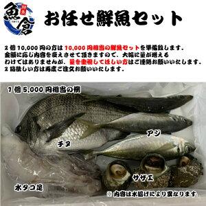 新鮮!お魚詰め合わせセット、鳥取県産、日本海産。魚、エビ、イカ、タコ、貝など旬の魚介類を詰め合わせ。