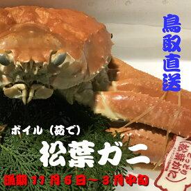 超特大サイズ 松葉ガニ(生) ボイル可能!鳥取県産 日本海産 タグ付き松葉ガニ3L 1枚約1.2kg以上(ズワイガニ)!!漁期11月6日〜3月中旬