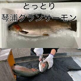 鳥取県琴浦町で湧き出る大山からの良質な地下水で育て上げた高品質な純国産サーモン(ニジマス、トラウトサーモン)です。