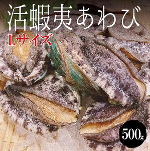 【豊洲直送】 活蝦夷あわびL 500g(1個約90g-100g) バーベキュー BBQ 冷蔵 活き 鮑 アワビ 5-6個 合計約