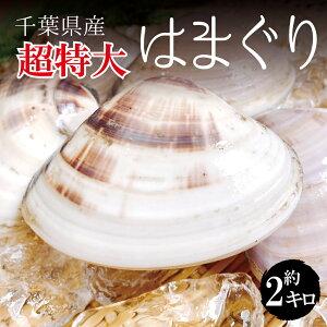 【超特大】 活き 天然地 はまぐり 合計約 2kg(1個約 170g-200g) 10-12個 千葉県産 ハマグリ 地蛤 バーベキュー BBQ 豊洲直送 チルド