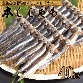 北海道直送 本ししゃも オス 40尾 北海道産 本物の味 釧路産 送料無料 ししゃも シシャモ 雄 旨い 情熱価格