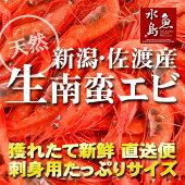 新潟・佐渡産「獲れたて生・甘エビ」南蛮エビ・刺身用大サイズ1kg(冷蔵)