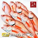 【送料無料】のどぐろ 新潟・日本海産 ノドグロ 100g以上・10尾(生冷凍)