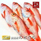のどぐろ新潟・日本海産ノドグロ250g以上・5尾(生冷凍)【送料無料】