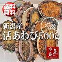 【送料無料】新潟県産 天然 活アワビ・あわび 500g 訳あり