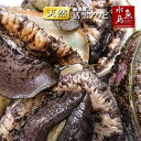 【送料無料】新潟県産 天然 活「黒アワビ」あわび 500g 訳あり