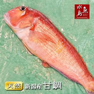 新潟産 天然 甘鯛 アマダイ(グジ)1,100〜1,199g(生冷凍)