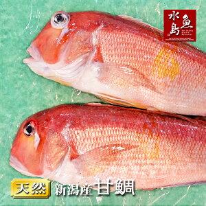【送料無料】新潟産 天然 甘鯛 アマダイ(グジ)1,500g以上・2尾(生冷凍)