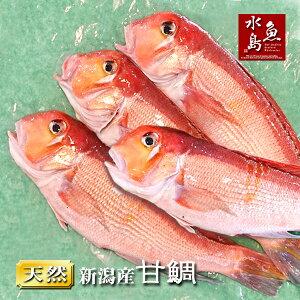 新潟産 天然 甘鯛 アマダイ(グジ)300〜399g・4尾(生冷凍)