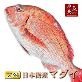 【送料無料】天然真鯛 マダイ 桜鯛 日本海産 3.5〜3.9キロ物