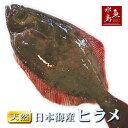 【送料無料】天然ヒラメ 平目 日本海産 4.5〜4.9キロ物