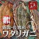 【送料無料】新潟・佐渡産 天然 ワタリガニ 渡り蟹 特大5杯