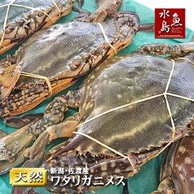 【送料無料】新潟・佐渡産 天然 ワタリガニ 渡り蟹 メス 特大5杯