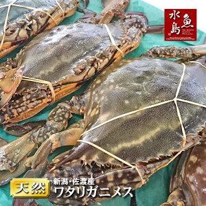 【送料無料】新潟・佐渡産 天然 ワタリガニ 渡り蟹 メス 中5杯