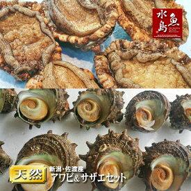 「あわび&さざえセット」 新潟産 天然 活アワビ90g×5個+活サザエ100g×10個
