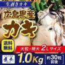 牡蠣かきカキ生ガキ生牡蠣生かき広島広島県産広島牡蠣広島カキ広島かき
