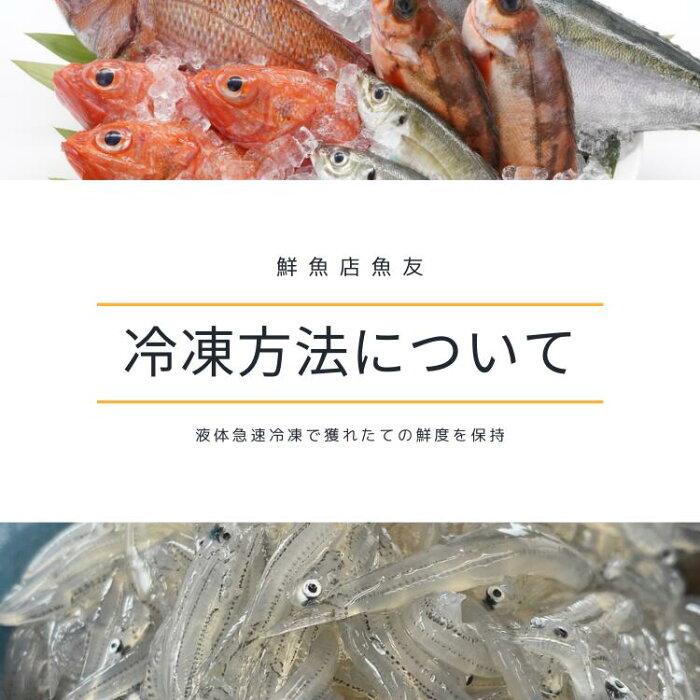 無添加!相模湾産あかもく(冷凍)150gパックアカモク海藻海草かながわブランド神奈川食物繊維健康
