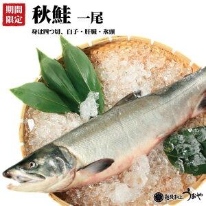 秋鮭一尾 【身は四つ切 白子 肝臓 中骨 氷頭】 生鮭雄4.5kg