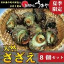 【新潟県産】天然サザエ(8個セット)