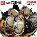 【日本海産】天然岩牡蠣8個セット《殻を割らずにお届け》