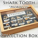 サメの歯 化石 コレクションボックス【モロッコ産】【鮫の歯の化石セット】サメの歯 化石 コレクション 原石 モロッコ フォッシル 天然石 パワーストーン