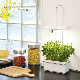 ◎灯菜 Akarina 15 OMA15[MotoM モトム アカリーナ LEDのインテリア照明と土を使わない栽培で植物を育てる栽培用のキット 室内をやさしく照らすライト 室内で水耕栽培により植物育成ができる]