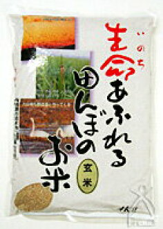 """2004 25 Annual """"field, full of life's rice paddies ' brown rice 4 kg"""