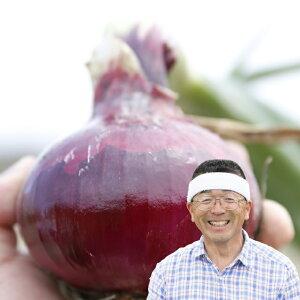 てっちゃんの淡路島赤たまねぎ10kg/2020年収穫!!【送料無料】