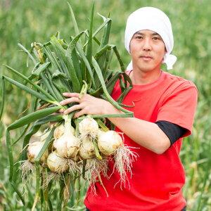 【2021年新玉ねぎ】淡路島産玉ねぎ 蜜玉(みつたま)10kg/2525ファーム 迫田瞬が有機肥料100%、特別栽培で育てました。※包装及びのし掛け不可
