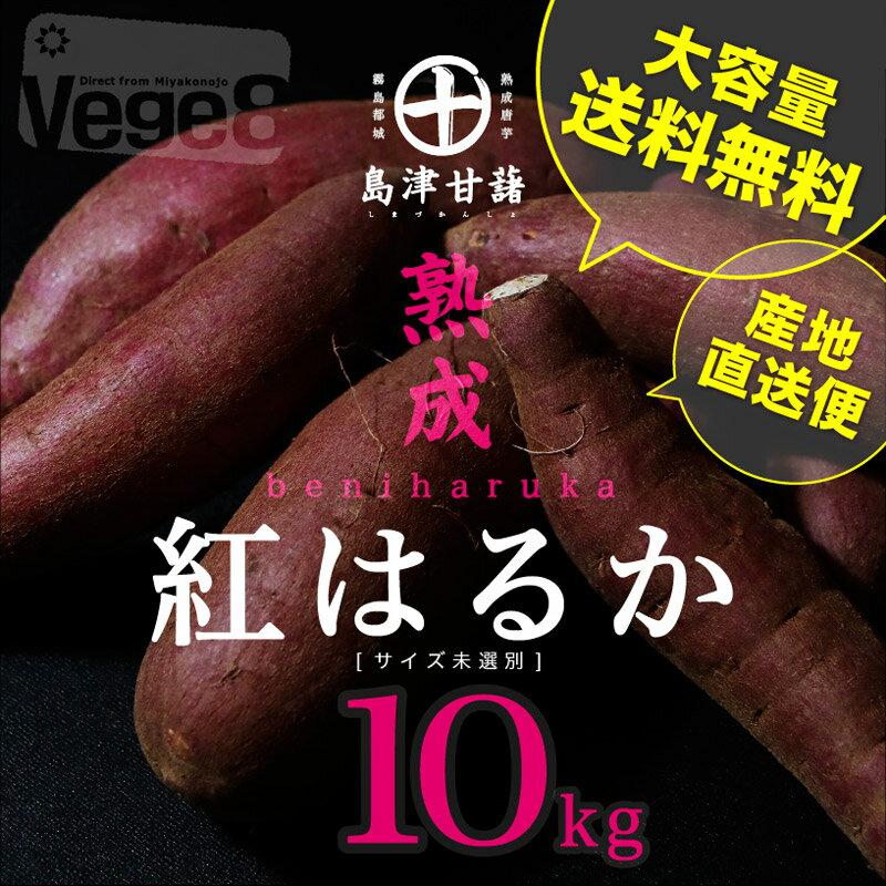 【島津甘藷】熟成★紅はるか 10kg(サイズ未選別2Lサイズ〜2Sサイズ)