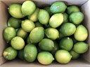 【送料無料】わけあり レモン 3kg 福岡県産 九州各地産 ワックス農薬防腐剤化学肥料不使用