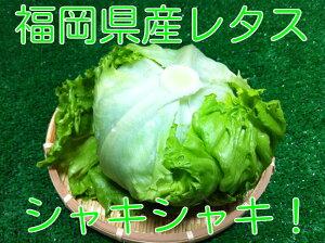 レタス【九州産】