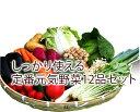 【送料無料】九州産しっかり使える定番野菜おまかせ12品セット