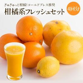 コールドプレス推奨 柑橘系フレッシュ 4回分セット【丸ごと】夏季限定クール便 野菜ジュース フルーツジュース