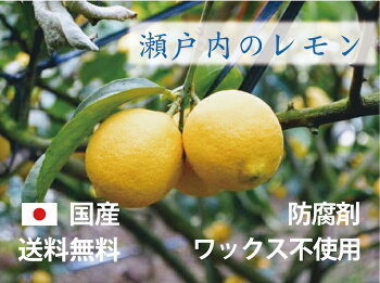 A級品広島県瀬戸田のレモン(無農薬)(1kg)楽天クーポン割引対象|佐川急便配送|