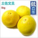 【土佐文旦 5kg】高知県産低農薬栽培。【送料無料】