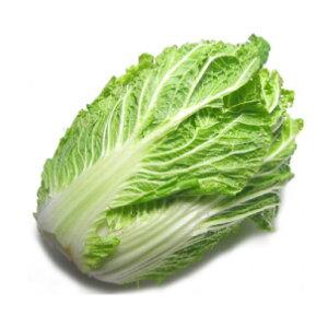 白菜 低農薬栽培 4玉