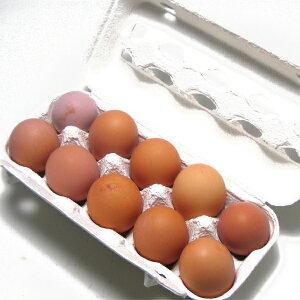 有精卵 小笠原さんの平飼自然養鶏の卵 20個