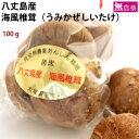 海風(うみかぜ)椎茸 八丈島 菌床栽培 100g×5袋