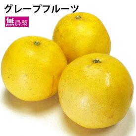 国産 グレープフルーツ 5kg