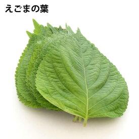 えごまの葉 栃木県産 無農薬栽培 10パック