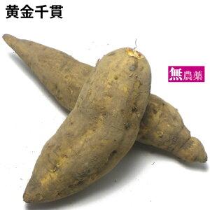 黄金千貫 鹿児島県産 無農薬栽培 3kg