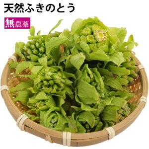 天然ふきのとう 新潟県産 天然物  50g 5パック