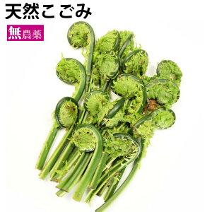 山菜 天然こごみ 新潟産 天然物 50g 5パック
