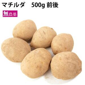 じゃがいも マチルダ 有機栽培 北海道産 無農薬栽培 500g