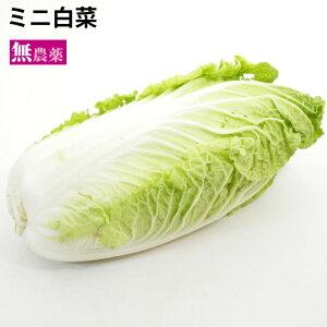 ミニ白菜 無農薬栽培 1個