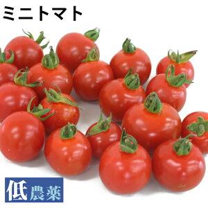 ミニトマト低農薬栽培 1kg